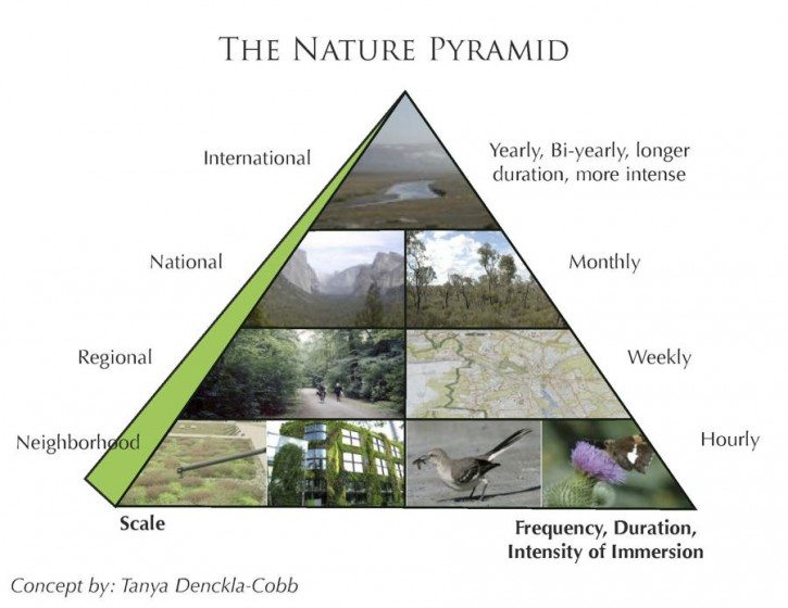 Exploring the Nature Pyramid – The Nature of Cities