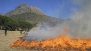 Contemporary fire management and use: a prescribed burn on the lower slopes of Devil's Peak, Table Mountain as part of an ecological restoration project. Photo: Penelope Waller