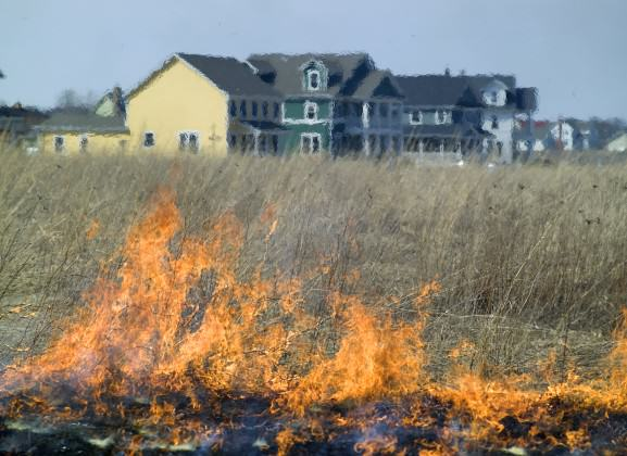 To promote native plant regeneration, a prescribed fire burns near the Prairie Crossing conservation development, Illinois. Photo by Mike Sands
