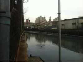 The Gowanus Canal. Photo by Emilie Ruscoe/Gothamist, http://gothamist.com/2013/01/25/bdolphin_reportedly_stranded_in_the.php#photo-10