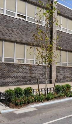 Street Tree Bioswale on Dean Street in Brooklyn. Credit: NYC DPR