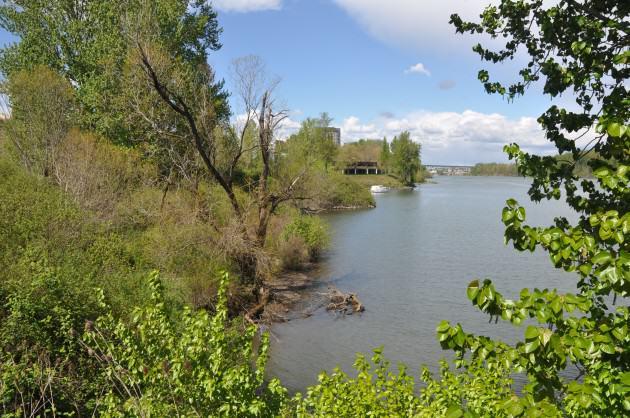 Heron Pointe Wetlands view downstream. Photo: Mike Houck