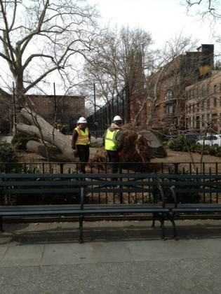 CP Tree Workers_2