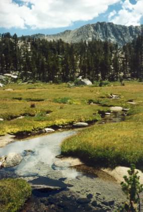 A Sierra Nevada meadow with a stream.  Photo: Eric W. Sanderson.