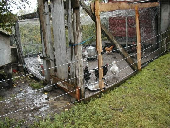One way to keep bears away from backyard chickens is to install an electrified fence around coops. Photo: Alaska Department of Fish and game