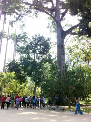 Rio de Janeiro Botanic Garden: people appreciating the huge Sumaúma (Ceiba petranda) – a giant tree from Amazon. Photo: Cecilia Herzog