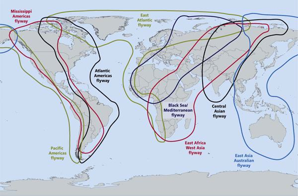 Flyways of the world. Credit: Wetlands International, 2009