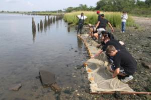 Jamaica Bay Restora¬tion Corps youth vol¬un¬teers busy at work dur¬ing the pre¬vi¬ous years' marsh restoration (CUNY Insti¬tute for Sus¬tain¬able Cities at Hunter Col¬lege and Artist As Cit¬i¬zen, from http://newyork.thecityatlas.org/lifestyle/community-restore-jamaica-bay-salt-marsh/).