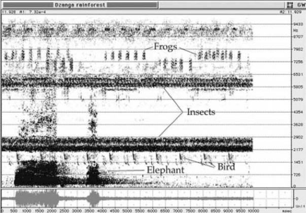 Spectogram of a meadow from Bernie Krause
