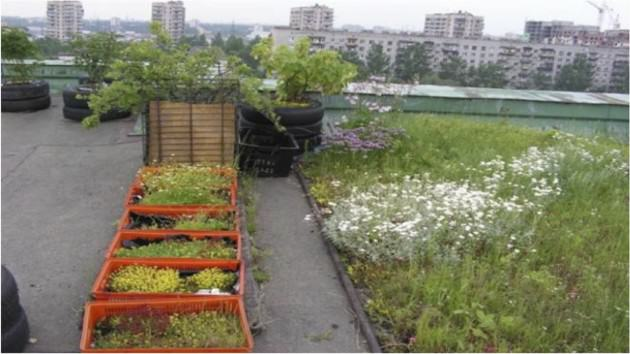 One of the few green roofs in St. Petersburg created by enthusiastic citizens