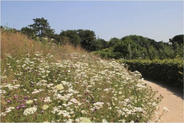Meadow with native plants is one of the targets in Novoye Devyatkino