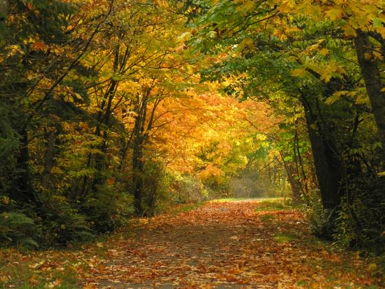A rural section of the popular Galloping Goose Regional Trail in autumn.  Photo by Bev Hall.