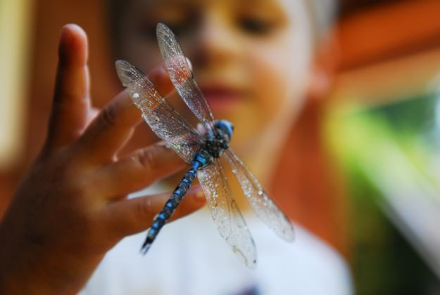 Child with dragonfly at one of CRD Regional Parks' interpretive programs. Photo by Deborah Kerr.
