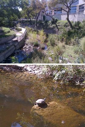 Waller Creek as it flows by the Austin Convention Center, and a resident turtle. Photos: Adrian Benepe