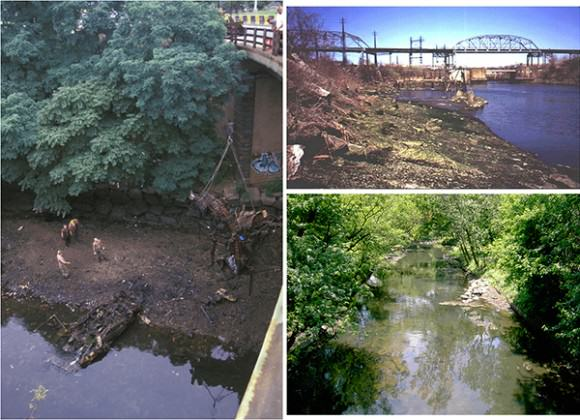 The Bronx River, before (upper right image) and after (lower right) restoration. Images courtesy of New York City Department of Parks and Recreation (NYC DPR)