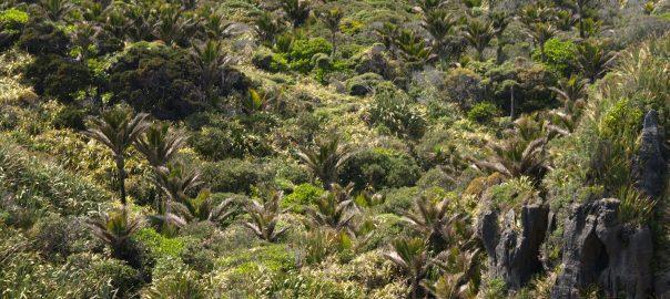 The subtropical forests at Punakaiki, Paparoa National Park, NZ. Photo: Glenn Stewart