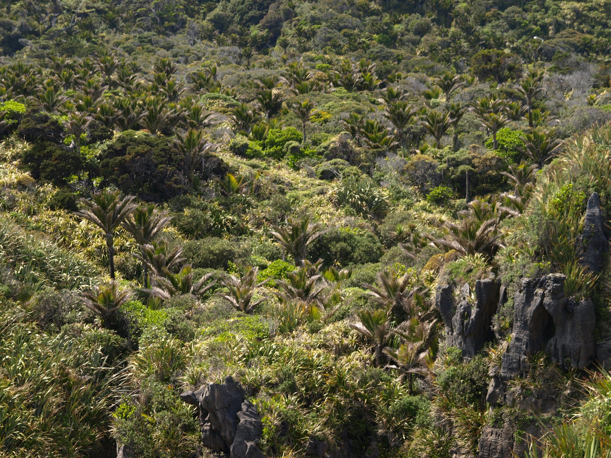 To See Biodiversity Downunder, Visit a National Park…or a City – The ...