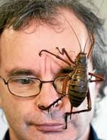 The world's largest insect – the giant weta (courtesy samdailytimes.blogspot.com)