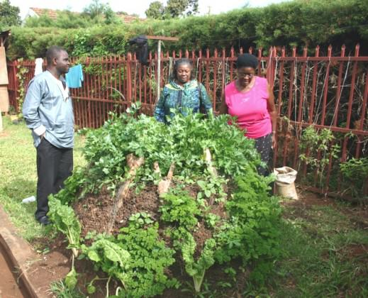 Kyanja Edible Landscape Project, agriculture and biodiversity, Kampala City Council 2008