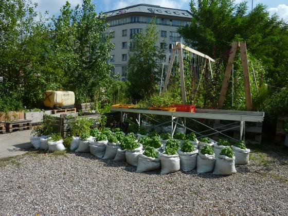 Portable vegetable garden in the Prinzessinnengarten in the heart of Berlin. Photo: Cecilia Herzog