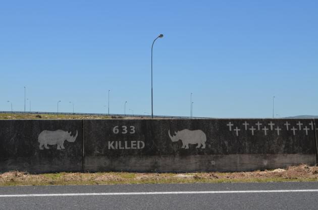 Rhinos II