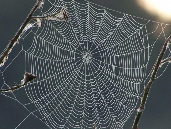 September 18 2012 011sprider web (3)