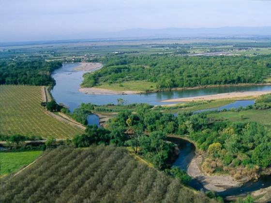 Riparian edge next to agriculture. Photo: Geoffrey Fricker, Univ. of California Agriculture