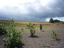 West Hayden island  (c) Sallinger (3)