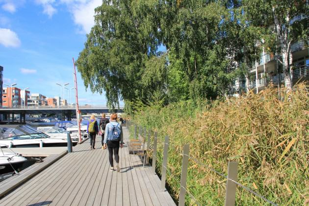 Large parts of the southern Lake shore was planted with reeds where a popular system of recreational boardwalks was built. Photo: Maria Ignatieva
