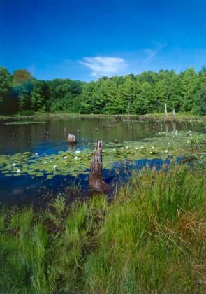Blue Heron Park in Staten Island, New York. Image courtesy of Natural Areas Conservancy