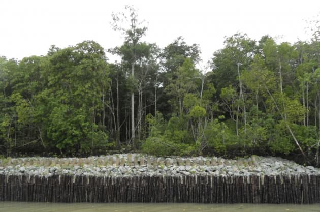 Hybrid coastal protection infrastructure comprising a low rock revetment interspersed with mangrove plants Photo: National Parks Board of Singapore