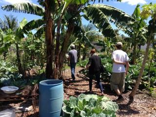 Little Haiti Community Garden. Photo: Marianne Krasny
