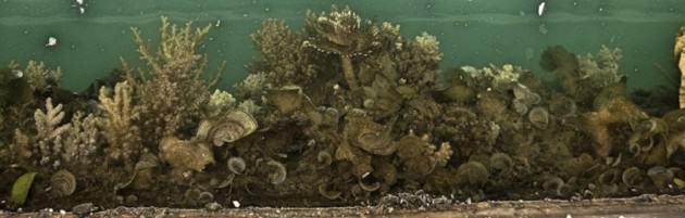 Marine organisms in Keppel Marina, Singapore.   Photo: Karenne Tun