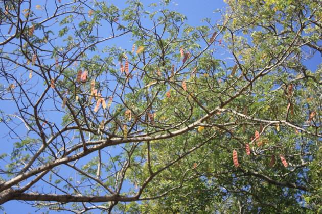 www.westafricanplants.senckenberg.de