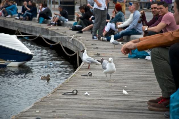Gulls-GamlaStan-Stockholm