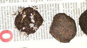 A seed bomb