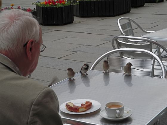 tea with sparrows