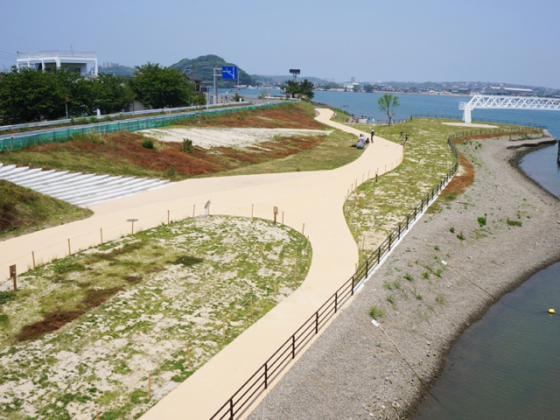 The site is gradually covered with grasses and challenging for more biodiversity; Lower part, 2013. Photo: Keitaro ITO