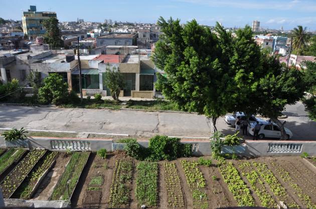 ...But, roof farming is not so recent either: La Havana, Municipio 10 de Octubre. Source: Wikimedia Commons