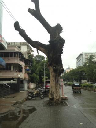 MumbaiStreetTree1