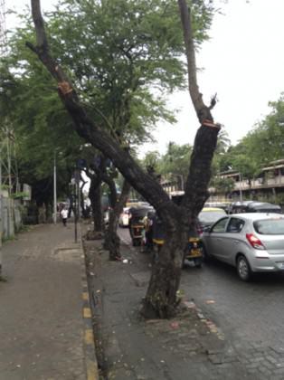 MumbaiStreetTree2