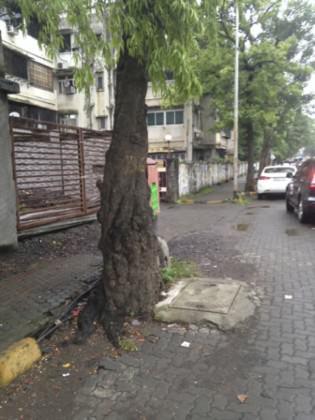 MumbaiStreetTree3