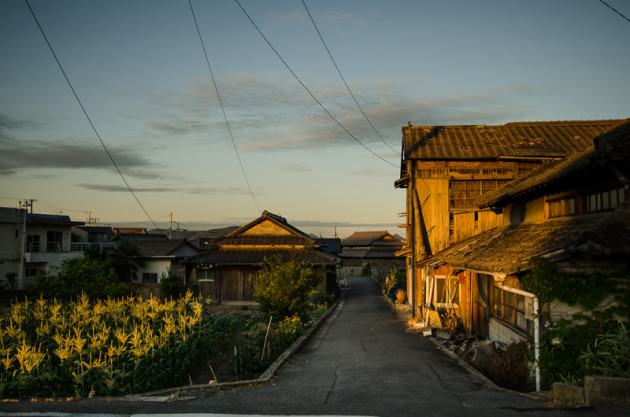 A small corn plot, adjacent to one of the many abandoned homes in Megijima. Photo: Patrick M. Lydon