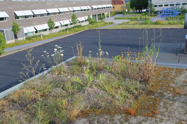 Experimental green roof in July 2014.
