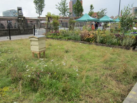 Temporary meadow in Manchester city centre. Photo: Janice Astbury