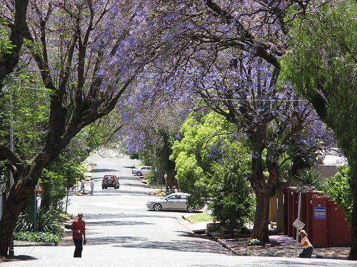 The Leafy Suburb, 4th Avenue, Melville, Johannesburg.