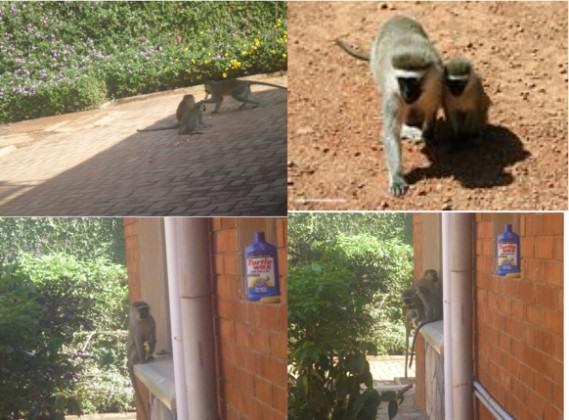 Urban biodiversity, Photograph taken in residential compound of writer. Photos: Shiaib Lwasa