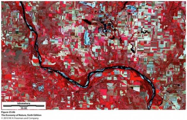 Satellite image showing distinctive patches of landscapes