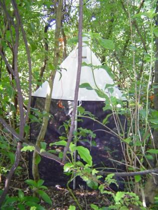 A malaise trap in the native forest remnant (Riccarton Bush) in 2013. Photo: Denise Ford