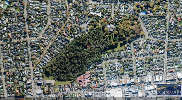 Aerial view of Riccarton Bush, Christchuch City. The native forest (dominated by an endemic podocarp tree, Dacrycarpus dacrydioides) is in the middle and lower left of the image (dark green) and on the right is a woodland of planted European species of trees that are now c. 150 years old. Photo: Google Earth